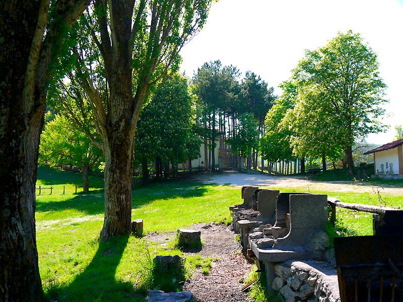 Borbona - Santuario di Santa Maria del Monte, la pineta