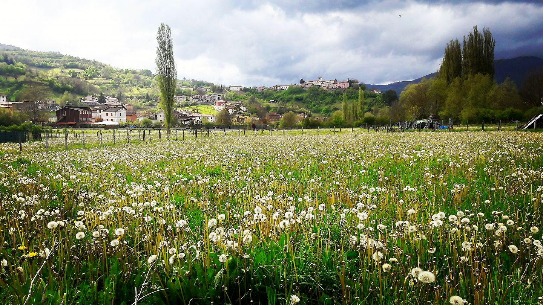Borbona, i fiori. Foto di Elvira Anzidei